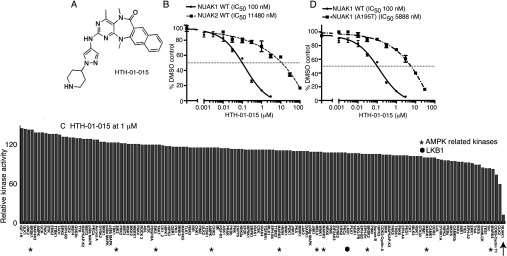 HTH-01-015, a specific NUAK1 inhibitor ( A ) Chemical structure of the NUAK1-specific inhibitor HTH-01-015. ( B ) Wild-type (WT) GST–NUAK1 and GST–NUAK2 were assayed using 200 μM Sakamototide in the presence of 100 μM [γ- 32 P]ATP (~500 c.p.m./pmol) with the indicated concentrations of HTH-01-015. The IC 50 graph was plotted using Graphpad Prism software with non-linear regression analysis. The results are presented as the percentage of kinase activity relative to the DMSO-treated control. Results are means±S.D. for triplicate reactions with similar results obtained in at least one other experiment. ( C ) Kinase profiling of the HTH-01-015 inhibitor at 1 μM was carried out against the panel of 140 kinases at the The International Centre for Protein Kinase Profiling ( http://www.kinase-screen.mrc.ac.uk/ ). AMPK family kinases are indicated with an asterisk, LKB1 with a filled hexagon and NUAK1 with an arrow. The full names of the kinases can be found in the legend to Supplementary Table S1 (at http://www.biochemj.org/bj/457/bj4570215add.htm ). ( D ) As in ( B ) except that HTH-01-015 comparative IC 50 values were derived for wild-type (WT) GST–NUAK1 and GST–NUAK1[A195T].