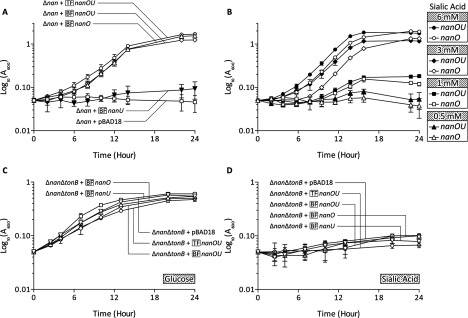 Ability of nanOU genes to support growth on sialic acid ( A ) Growth kinetics of E. coli MG1655 Δ nanCnanR(amber) Δ ompR :: Tn10 ( tet ) (Δ nan ) mutant strains complemented in trans with the nanOU genes from T. forsythia (TF- nanOU , ○), B. fragilis (BF- nanOU , ∆) or the individual B. fragilis nanO (BF- nanO , ◇) or nanU (BF-nanU, ▼) expressed from pBAD18 (also included as a negative control, □) were monitored ( A 600 ) during culture at 37°C in M9 minimal media with 15 mM Neu5Ac. Results are means±S.D. from three separate biological replicates. ( B ) The Δ nan strain complemented with either B. fragilis nanO (BF- nanO , open symbols) or nanOU (BF- nanOU , close symbols) was incubated as above but with 6 (● and ○), 3 (◆ and ◇), 1 (■ and □) or 0.5 (▲ and ∆) mM Neu5Ac. Results are means±S.D. from three separate biological replicates. ( C and D ) The sialic acid transport and tonB -deletion mutant strains [Δ nanCnanR ( amber ) Δ ompR :: Tn10 ( tet ) Δ tonB :: FRT-Km-FRT –Δ nan Δ ton ] were complemented as in ( A ) and ( B ) in M9 medium with either 15 mM glucose ( C ) or Neu5Ac ( D ) as indicated and growth followed over time. Results are means±S.D.