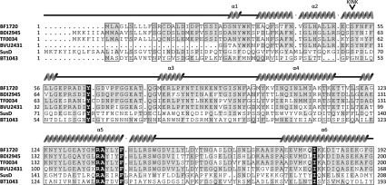 Sequence alignment of NanU with SusD family members The sequence alignment profile of the N-terminal region was generated using the Multalin Server ( http://multalin.toulouse.inra.fr/multalin ). Structural motifs predicted for BF1720 are presented on the top of the sequence alignment, where spirals represent α-helices. The kink in the α2 helix is indicated by an arrowhead. Conserved residues across the orthologues are highlighted in grey. The sources of these SusD proteins are as follows: BF1720 from B. fragilis NCTC 9343, BDI2495 from Parabacteroides distasonis A.T.C.C. 8503, TF0034 from T. forsythia A.T.C.C. 43037, BVU2431 from B. vulgatus A.T.C.C. 8482, and SusD from BT1043 from B. thetaiotaomicron VPI-5482 (PDB code 3CKC) and B. thetaiotaomicron VPI-5482 (PDB code 3EHN).