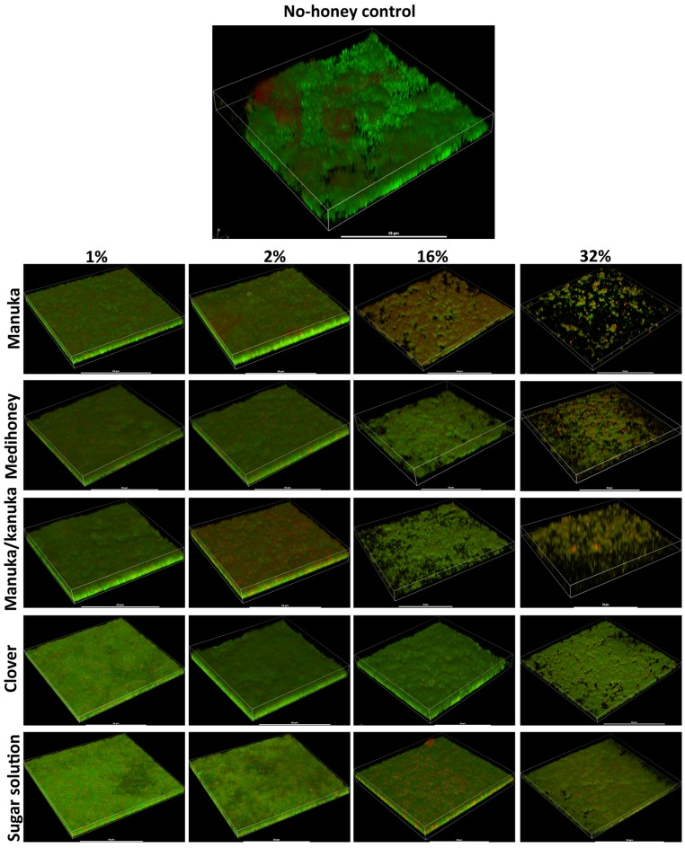 Live/dead staining of different honey treated established biofilms. Established biofilms produced by S. aureus NCTC 8325 were treated with TSB containing honey (manuka, Medihoney, manuka/kanuka or clover) or sugar solution at 1%, 2%, 16%, and 32% (w/vol). Syto9 (green; viable cells) and propidium iodine (red; dead cells) stained images were acquired using Nikon A1 Confocal Laser Scanning Microscope. The 3D- images were reconstructed using NIS-elements (version 10). Scale bar represents 50 µ m.