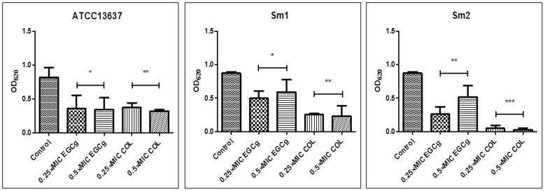 Effects of COL and EGCg against Sm biofilm formation. Reference strain ATCC13637 and two clinical isolates (Sm1, and Sm2) were used. <t>Biofilms</t> were stained with crystal violet and their biomasses were determined by optical density (OD) measurement at 620 nm. Compared to untreated control cells, samples exposed to EGCg and COL exhibited a significant reduction in the number of Sm sessile cells of ATCC13637 and Sm1. Results are expressed as average OD ± standard deviation (SD). Experiments were performed in triplicate. * P