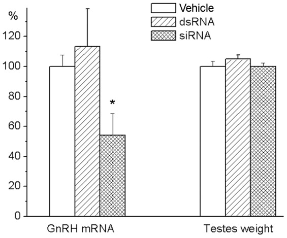 Testes weight in 7-day old rats after siRNA knockdown of GnRH expression. siRNA targeting GnRH mRNA from 369 to 389 (200 μM in 5 μl of OptiMEM) was injected into the anterior hypothalamic preoptic area on the day 5 of life. Animals of control groups received the same volume of vehicle or the same amount of control short double stranded RNA (dsRNA), which has no homology with any rat mRNA. Rats were weighted and sacrificed at the day 7 of life. Testes were dissected and weighted. Probes of cDNA were synthesized from total mRNA extracted from the anterior hypothalamic preoptic area. Probes were examined for GnRH mRNA expression by the TaqMan assay-based real-time PCR. The comparative ddCT method was used to calculate mRNA expression relative to the beta-actin as an endogenous control. Data are expressed as percentages of the values for the vehicle-treated control group that was taken as 100%, and presented as mean ± SEM of 7 individual animals. *p