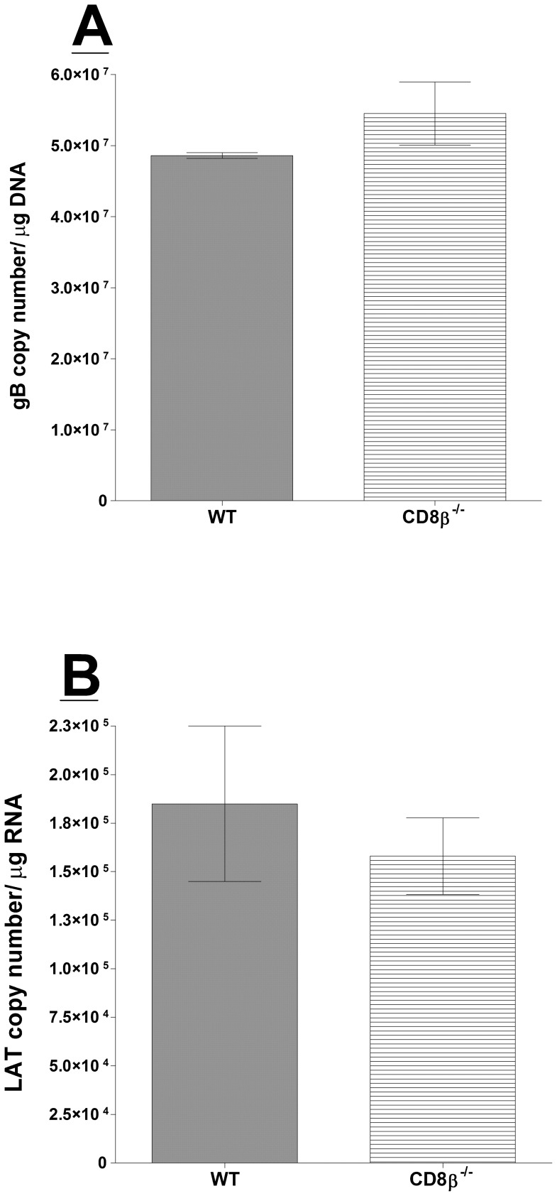 Quantitation of HSV-1 latency in CD8β −/− infected mice. Wild-type (WT) C57BL/6 and CD8β −/− mice were infected as described in Materials and Methods. Twenty-eight days PI, TGs from infected mice were harvested and quantitative PCR and RT-PCR were performed on each individual mouse TG. Each data point for gB DNA represents the mean ± SEM from 24 TGs. For LAT RNA, each data point represents 22 TGs for CD8β −/− and 18 TGs for WT mice from two separate experiments. Panels: A) gB DNA; and B) LAT RNA.