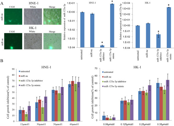 miR-125a-5p could mediate the anti-proliferation effect of gefitinib on NPC cells. (A) . Using oligo-miR-nc (FAM) as an example, a FAM reporter assay confirmed that the miRNA oligos used in this study were successfully transfected into HNE-1 and HK-1 cells. qRT-PCR revealed that the relative quantities of miR-125a-5p were decreased in cells transfected with oligo-miR-125a-5p inhibitor ( P