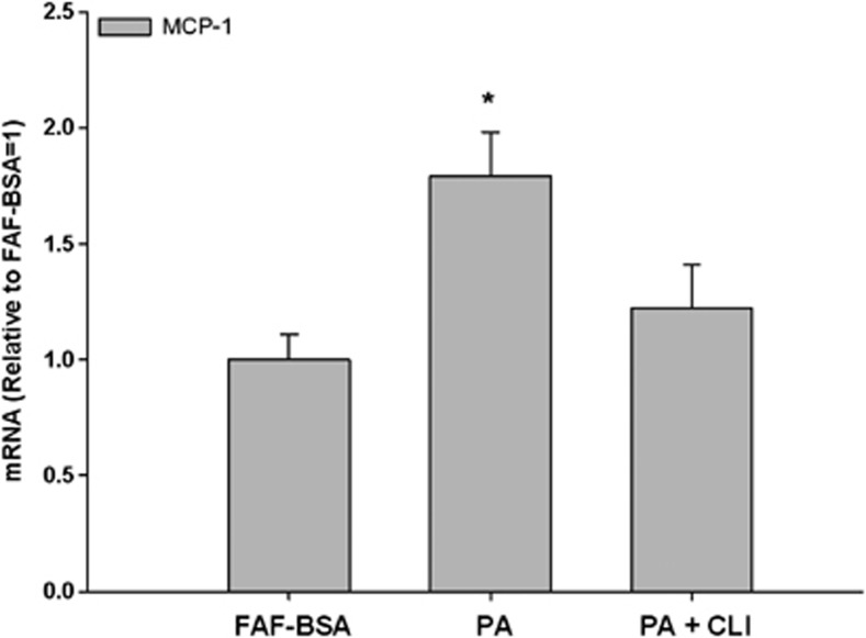 Effect of palmitic acid on MCP-1 mRNA expression in THP-1 macrophages. THP-1 macrophages were incubated with RPMI-1640 growth media containing 2% FAF-BSA and palmitic acid (PA, 500 μ M ) alone or in combination with the TLR4-inhibitor CLI095 (CLI, 3 μ M ) for 24 h. Results were expressed as±s.e.m., relative to FAF-BSA=1 ( n =9), * P