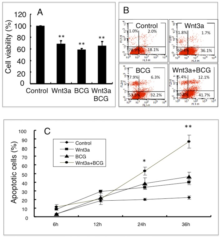 The activation of Wnt/β-catenin signaling promotes BCG-infected cell apoptosis. ( A ) An MTT assay determined the cell viability of RAW264.7 cells treated with indicated conditions for 24 h; ( B ) Representatives of dot plot from five independent experiments of flow cytometry analysis of the apoptotic fraction of RAW264.7 cells treated with indicated conditions for 24 h; ( C ) A time-dependent apoptotic cell death fraction of RAW264.7 cells treated with indicated condition for different time points. Compared to a naïve control, * p