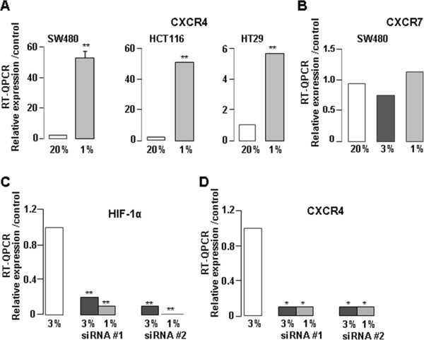 CXCR4 expression in different colon cell lines cultured in hypoxia. (A) Transcript CXCR4 expression in normoxia (20% O2) and hypoxia (1% O2) in SW480, HCT116 and HT29 cell lines. (B) Transcript CXCR7 expression in normoxia (20% O2) and in hypoxia (3% and 1% O2) in SW480 cell line. Trancript HIF-1α (C) and CXCR4 (D) expression after siRNA #1 or #2 anti-HIF-1α transfection; * p = 0.015; ** p = 0.001.