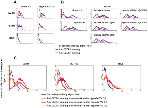Regulation of CXCR4 and CXCR7 protein expression at the cell membrane using flow cytometry. (A) CXCR4 and CXCR7 expression at the cell membrane of SW480, HCT116, and HT29, in normoxia (20% O2) and hypoxia (1% O 2 ). (B) CXCR4 and CXCR7 expression in SW480 cells after siRNA anti-HIF-1α or anti-CXCR4 in hypoxia. (C) Cell membrane CXCR4 protein expression after transient passage in hypoxia. SW480, HCT116 and HT29 cells were cultured 24 hours in 3% hypoxia and further maintained for 8, 24 and 48 hours in normoxia.
