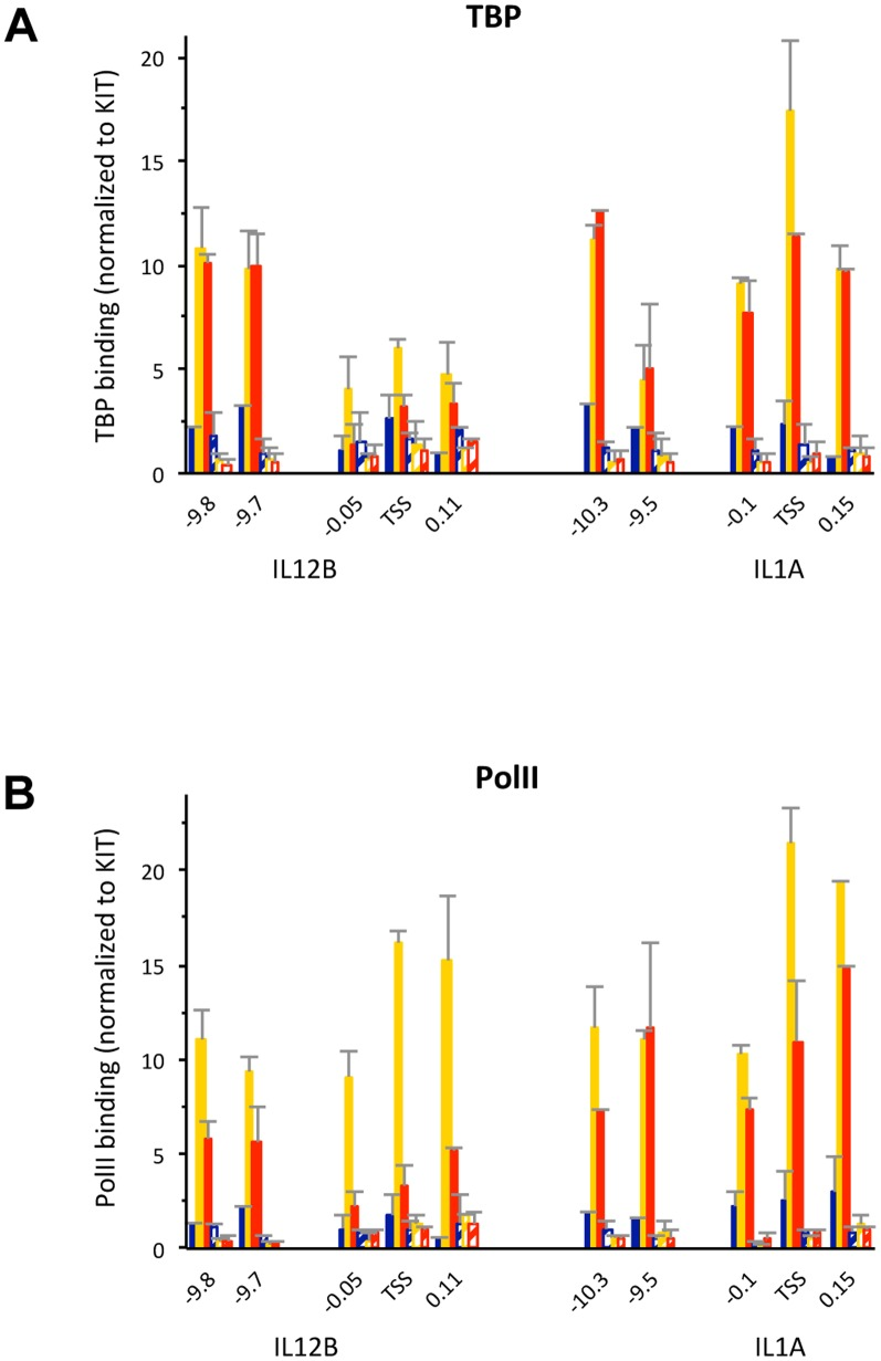 PolII and TBP binding in the fraction of IL12B and IL1A promoters in a population of induced BMDMs that is nucleosome-free. (A and B), ChIP experiments were performed as described in the legend of Figure 2F with antibodies that detect (A) PolII or (B) TBP in BMDMs before (dark blue bars), and upon 1.5 h (yellow) or 3 h (red) LPS induction. Cross-linked chromatin was either untreated (solid bars), or lightly digested with MNase (hatched bars) as described in the Materials and Methods . The data was normalized to a region in the KIT promoter and genomic locations are indicated. The experiment was performed twice and error bars indicating the SEM are shown.