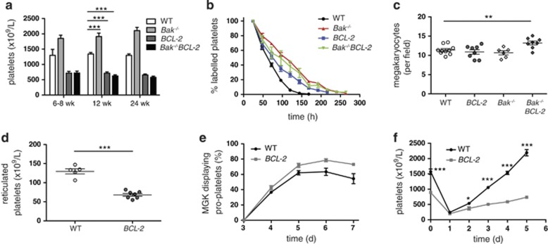 Loss of Bak does not prevent thrombocytopaenia in <t>BCL-2</t> tg mice. ( a ) Blood platelet counts in WT (white), Bak − / − (light grey), BCL-2 tg (dark grey) and Bak − / − BCL-2 tg (black) mice at 6–8 weeks ( n =4–7 per genotype), 12 weeks ( n =9–14) and 24 weeks ( n =15–20). Bars represent mean±S.E.M. Statistical significance is shown only for 12-week-old mice; *** P