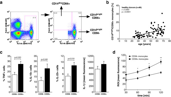 CD14 bright /CD56+ monocyte subset is expanded in older healthy controls and produces more cytokines in response to <t>lipopolysaccharide.</t> (a) Representative dot plot of CD14 and CD56 expression on monocytes. Three relevant subpopulations are separated by the quadrants and marked by the arrows in the right panel. APC, allophycocyanin; FITC, fluorescein isothiocyanate; FL1-H, fluorescence intensity on channel that detects emissions from fluorescein isothiocyanate. (b) Scatterplot showing the correlation between age and the peripheral blood frequencies of CD14 bright /CD56+ monocytes in healthy controls. (c) Bar graphs depict the frequency of tumor necrosis factor-positive (TNF+) ( n = 5), interleukin 10-positive (IL-10+) ( n = 8) and IL-23+ ( n = 7) cells and the mean intracellular <t>IL-1β</t> content ( n = 7) in CD56+ and CD56– monocytes of healthy controls in response to lipopolysaccharide. (d) Spontaneous reactive oxygen intermediate (ROI) production of CD56– and CD56+ monocytes ( n = 4).