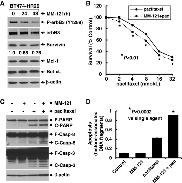 MM-121 specifically downregulates Survivin and significantly enhances paclitaxel-induced anti-proliferative/anti-survival effects and apoptosis in a trastuzumab-resistant breast cancer cell line. (A) BT474-HR20 cells were untreated, or treated with MM-121 (10 μg/ml) for 24 or 48 h. Cells were collected and subjected to western blot analyses of <t>P-erbB3,</t> erbB3, Survivin, Bcl-xL, Mcl-1, or β-actin. The densitometry analyses of Survivin signals are shown underneath, and the arbitrary numbers indicate the intensities of each sample relative to control, defined as 1.0. ( B) BT474-HR20 cells were plated onto 96-well plates and incubated at 37°C with 5% CO 2 . After 24 h, the culture medium was replaced with 0.1 ml fresh medium containing 0.5% FBS or the same medium containing the indicated concentrations of paclitaxel in the absence (paclitaxel) or presence (MM-121 + pac) of MM-121 (10 μg/ml) for another 72 h. The percentages of surviving cells from each cell line relative to controls, defined as 100% survival, were determined by reduction of 3-(4,5-dimethylthiazol-2-yl)-5-(3-carboxymethoxyphenyl)-2-(4-sulfophenyl)-2H-tetrazolium, inner salt (MTS). Bars represent SD. Data are representative of three independent experiments. (C and D) BT474-HR20 cells were untreated, or treated with either MM-121 (10 μg/ml) or paclitaxel (8 nmol/L) alone, or their combinations for 24 h. Cells were collected and subjected to western blot analyses of poly(ADP-ribose) polymerase (PARP), caspase-8, caspase-3, or β-actin (C) ; or a specific apoptosis ELISA (D) . Bars represent SD. * P