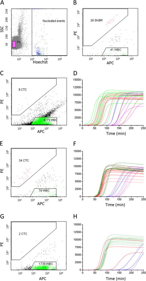 Flow-cytometric analysis of CellSearch-enriched circulating tumor cells and real-time whole genome amplification of single-sorted leukocytes and circulating tumor cells. Panels (A) and (B) show the sort gates to identify and sort single CTC, single leukocytes and beads. Panels (C) (Table 1 , patient 7), (E) (Table 1 , patient 1) and (G) (Table 1 , patient 2) show the analysis and sort gates of three patients with lung cancer. Panels (D) , (F) and (H) show the corresponding real-time DNA amplification of the individual sorted cells. The curves show the Evagreen fluorescence of the whole genome amplification reaction mixes in time. APC = allophycocyanin, PE = phycoerythrin, SSC = sidescatter.