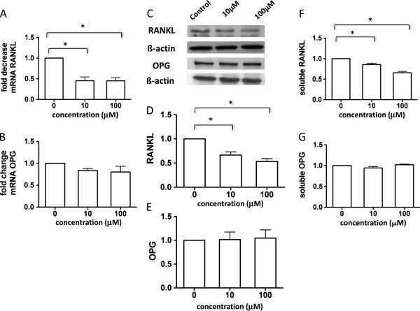 Methotrexate decreases mRNA and protein expression of RANKL and RANK in rheumatoid arthritis synovial-derived fibroblasts. A significant decrease in the receptor activator of the NF-κB ligand (RANKL) mRNA levels (A) with no changes in osteoprotegerin (OPG) mRNA levels (B) in the presence of methotrexate (MTX). Representative blots and graphs showing decrease of cellular RANKL protein expression (C and D) with no changes in the cellular OPG expression (C and E) in the presence of MTX. Decrease of soluble RANKL protein expression (F) with no changes in the soluble OPG expression (G) in the presence of MTX, where results are quantified by enzyme-linked immunosorbent assay. *p