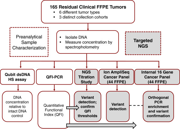 Study design. The study design coupled pre-analytical FFPE DNA characterization across three methods (spectrophotometry, fluorescence dye-based quantification, and QFI-PCR) with variant calling results from targeted <t>NGS</t> and confirmation assays to assess the impact of template quality and set thresholds for minimum 'functional' DNA inputs. dsDNA, double-stranded DNA; HS, high sensitivity.
