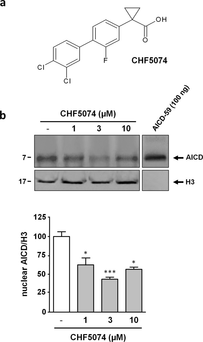 """CHF5074 lowers AICD nuclear levels in H4swe cells. (a) Chemical structure of CHF5074. (b) Immunoblot analysis (anti-APP C-terminal antibody) of nuclear extracts from H4swe cells treated for 18 hours with vehicle or with different concentrations of CHF5074 (1–10 μM) as indicated. A single polypeptide band immunoreactive to the anti-APP C-terminal antibody was detected in nuclear templates. Synthetic AICD-59 polypeptide (7 kDa; shown on the right) was used as a molecular mass and electrophoretic mobility reference for these experiments (upper row). Polypeptide band from the same gel was detected with an anti-histone H3 antibody (lower row). Full-length blots were presented in Supplementary Figure S2 . Data from multiple experiments are presented as bar plots derived from densitometric quantification of anti-APP C-terminal antibody immunoreactive bands (""""test"""") normalized with respect to the immunoreactivity signals (""""control"""") produced by the anti-histone H3 antibody. The test/control ratio for vehicle-treated samples was arbitrarily set to 100%; bars are the mean ± s.e.m. of three independent experiments (*, p"""