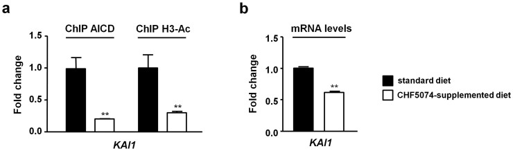 Effect of in vivo CHF5074 treatment on AICD occupancy, histone H3 acetylation and transcriptional activity of the KAI1 gene. (a) Chromatin immunoprecipitation assays performed on brain cortices from Tg2576 mice treated for 4 weeks with standard ( black bars ) or CHF5074-supplemented diet (375 ppm; ≈60 mg/kg/day; white bars ) using anti-APP C-terminus and anti-acetyl H3 as test antibodies and an anti-IgG as a negative control antibody. DNA extracted from immunoprecipitated chromatin was analyzed by qRT-PCR, setting C T values relative to untreated samples to 1.0 (see 'Methods' for details). (b) KAI1 mRNA levels determined by qRT-PCR analysis of reverse-transcribed total RNA extracted from brain cortices of Tg2576 mice fed on standard ( black bars ) and CHF5074-supplemented ( white bars ) diet as above. Data are presented as relative values determined with the comparative C T method using β-actin as house-keeping gene reference; bars are the mean ± s.e.m. of three independent experiments (**, p