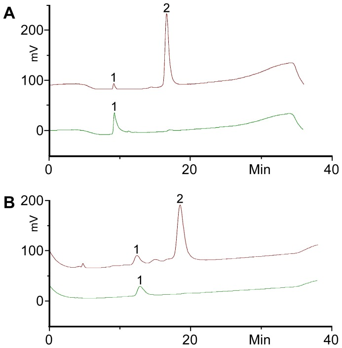 HPLC chromatograms of BODIPY-GM3 (A) and BODIPY-GD1a (B) recovered from enzyme reactions; reaction products from the sialyltransferase reactions were purified by HPLC and analysed (top trace) showing mainly the product (peak 2) and only little amounts of starting material (peak 1). The samples were treated with sialidase overnight at 37°C (lower trace, approximately 10-fold dilution from treatment before) and analysed showing complete conversion to the starting material (peak 1).