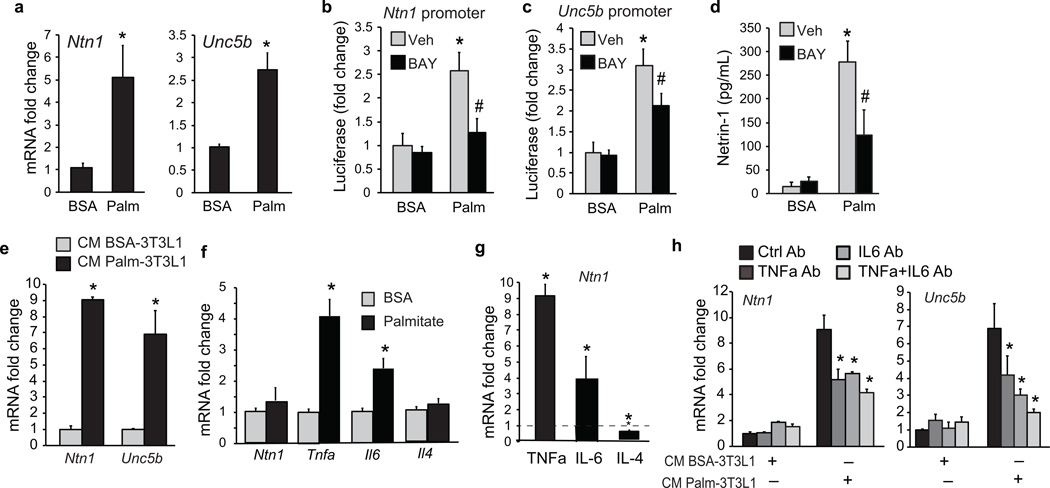 Palmitate upregulates Ntn1 and Unc5b expression in macrophages ( a ) Ntn1 and Unc5b mRNA in BMDM treated with 250 µM BSA or palmitate for 24 h. ( b ) Ntn1 and ( c ) Unc5b promoter-luciferase reporter activity in HEK293T cells treated with 250 µM BSA or palmitate in the presence of the NFkB inhibitor BAY11-7082 (10 µmol/L) or vehicle (veh). ( d ) Concentration of netrin-1 in culture supernatants of BMDM treated with 250 µM BSA or palmitate for 24 h in the presence of BAY11-7082 or vehicle. ( e ) Ntn1 and Unc5b mRNA in BMDM treated with conditioned media (CM) from 3T3L1 adipocytes exposed to BSA or palmitate (250 µM) for 24 h. ( f ) qRT-PCR of mRNA from 3T3L1 adipocytes treated with BSA or palmitate (250µM) for 24 h. ( g ) Ntn 1 mRNA in BMDM treated with TNFα (10 ng/ml), IL-6 (40 ng/ml) or IL-4 (10 ng/ml) for 24 h. ( h ) Ntn1 and Unc5b mRNA in BMDM treated with CM from 3T3L1 adipocytes exposed to BSA or palmitate (250 µM) in the presence or absence of anti-TNFα, anti-IL-6 or both. Data presented are the mean ± s.d. of triplicate samples from a single experiment and are representative of three independent experiments. * P