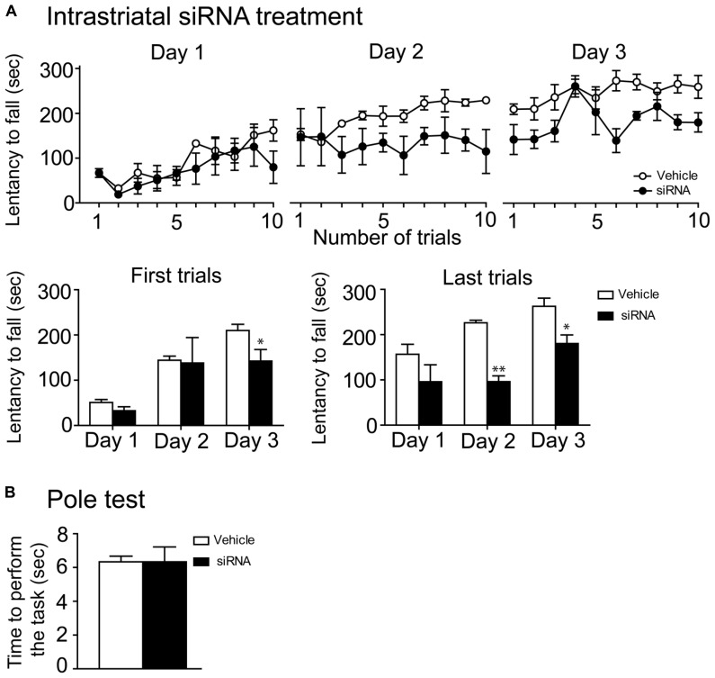 mTOR siRNA infusion impaired rotarod learning. (A) Time spent by vehicle (distillated/deionized water <t>DNase/RNase</t> free) and siRNA-treated mice on the accelerating rotarod for each trial at days 1, 2, and 3. Rotarod learning was analyzed by pooling together the two first or the two last trials/training day of both groups. Data represent the average mean latency to fall expressed in seconds ± S.E.M, n = 3–4 vehicle-treated and siRNA-treated mice. ** P