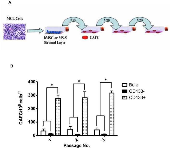 <t>CD19−CD133+</t> MCL cells demonstrate increased self-renewal, compared to CD19+CD133− MCL cells. (A) Diagram of the self-renewal assay. (B) CAFC analysis comparing bulk, CD133− and CD133+ MCL cells. (*p