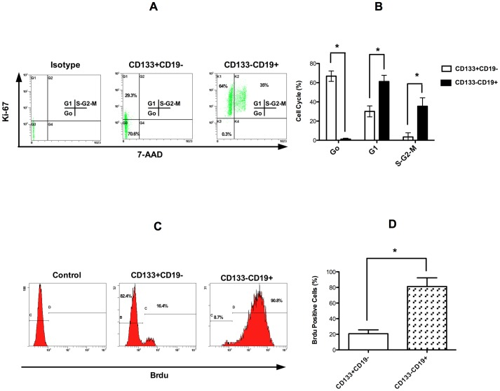 CD19−CD133+ MCL cells demonstrate increased quiescence. (A) A representative dot plot of Ki-67 stained MCL cell subpopulations (UPN1). (B) Bar graph summarizing the data derived from 6 patients (*p