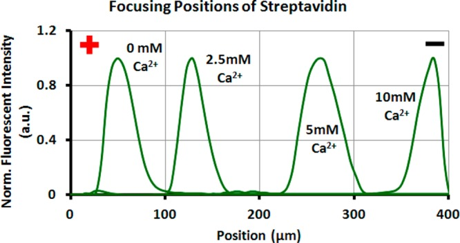 Line-scan fluorescence profiles of the streptavidin focusing positions on SLBs after the PLD-catalyzed reactions in Figure 4 . All SLBs were incubated with PLD and Ca 2+ for 10 min.