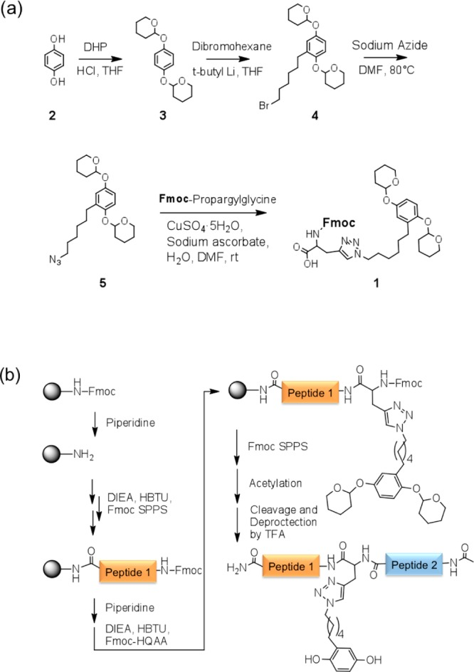 (a) Synthesis of a protected hydroquinone tethered Fmoc amino acid (HQAA; 1 ) for use in solid phase peptide synthesis to generate peptides containing the hydroquinone group for site-specific CRRL chemistry. (b) Scheme showing how HQAA ( 1 ) can be added to any site within a peptide by applying standard solid phase peptide synthesis technology. This strategy allows for the CRRL method to be incorporated into a variety of biomolecules.