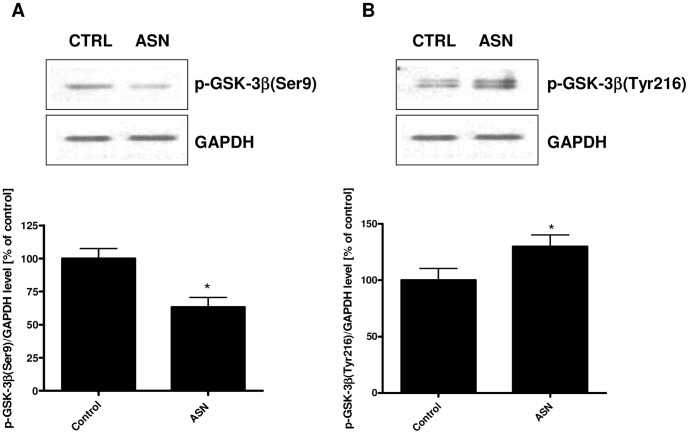 The effect of ASN on the phosphorylation state of GSK-3β. PC12 cells were incubated in the presence of 10 μM ASN for 48 h. The phosphorylation status of GSK-3β at Ser9 and Tyr216 was determined using Western blot analysis. ( A ) Immunoreactivity of p-GSK-3β (Ser9). ( B ) Immunoreactivity of p-GSK-3β (Tyr216). GAPDH was used as a loading control. Data represent the mean value ± S.E.M. for 5 independent experiments. * p