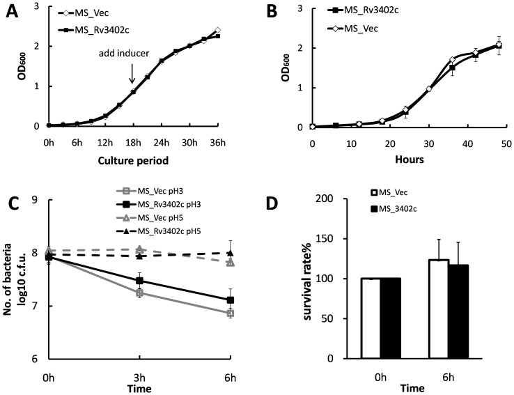Growth of MS_Vec and MS_Rv3402c under stress conditions. (A). Growth of MS-Vec and MS-Rv3402c at 37°C in MB 7H9 liquid medium was monitored by determining OD 600 at intervals of 3 h. (B). Growth curve of MS-Vec and MS-Rv3402c in iron-depleted medium. Two recombinant M. smegmatis were grown in MB 7H9 medium supplemented with 100 μM 2′ 2′ dipyridyl. The growth of the strains were monitored by measuring OD 600 at intervals of 6 h. (C). In vitro growth of MS-Vec and MS-Rv3402c at different pH. The bacteria were collected by centrifugation and resuspended to an OD 600 of 0.5 in 5 ml MB 7H9 (pH 5 or 3). All cultures were again incubated at 37°C and 0.1 ml removed for viable count enumeration after 0, 3 and 6 h. (D). Survival of recombinant M. smegmatis after exposure to hydrogen peroxide. Aliquots (5 ml) of cultures at OD 600 of 0.5 were exposed to 5 mM hydrogen peroxide (H 2 O 2 ) for 6 h at 37°C. The cultures were serially diluted and plated onto MB 7H10 plates and the colonies counted after 3–4 days of incubation at 37°C.