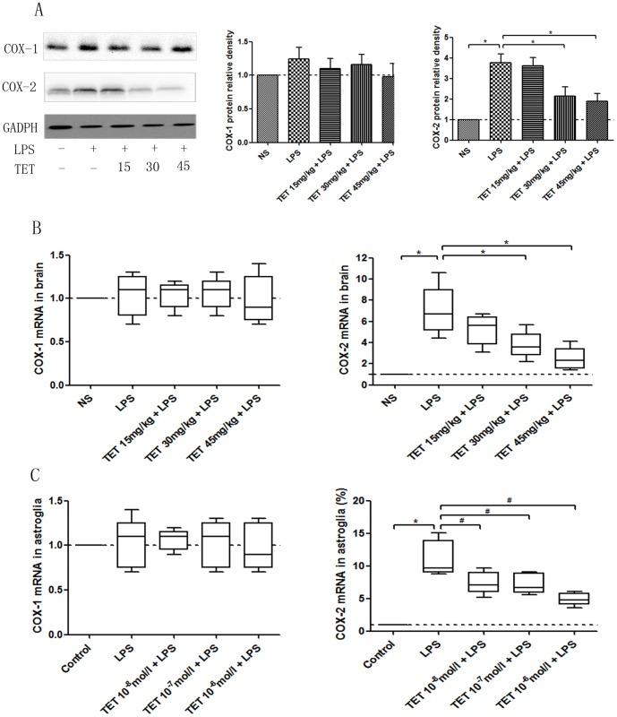 Repressive effects of TET on the expression of COX-1 and COX-2 in LPS-induced hyperalgesia. (A) Western blotting of COX-1 and COX-2 in brain tissues and the quantified comparison of relative densities are shown. (B) COX-1 and COX-2 mRNA expression were tested by qRT-PCR in brain tissues. (C) COX-1 and COX-2 mRNA expression were tested by qRT-PCR in cultured astroglia. Values are shown as M±SD, and normalized to the NS groups. *, P