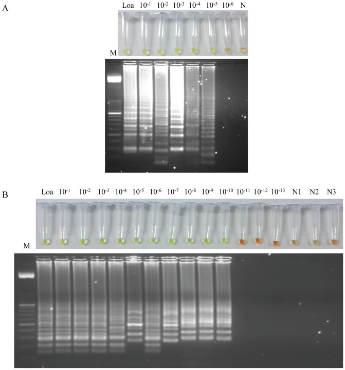 Sensitivity assessment of the LAMP assay for Loa loa using serial dilutions of genomic DNA by the addition of SYBR Green I or by visualization on agarose gel stained with ethidium bromide. (A) Sensitivity assessment performed with a <t>thermocycler.</t> (B) Sensitivity assessment performed with a heating block. Lane Loa: genomic DNA from Loa loa (5 ng); lanes 10 −1 –10 −13 : 10-fold serially dilutions; lanes N, N1, N2, N3: negative controls (no DNA template). Lane M: 50 bp DNA ladder (Molecular weight marker XIII, Roche).