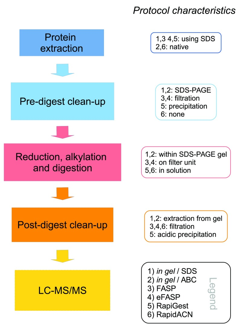 Characteristics of label-free sample preparation methods. Left panel: Schematic overview of the different steps in an LC-MS/MS sample preparation method. Right panel: Main characteristics of the protocols compared in this study. Detailled protocols are given in the Supplementary material . Supplementary protocol 1 : In gel/SDS; 2: In gel/ABC; 3: FASP; 4: eFASP; 5: RapiGest; 6: RapidACN.