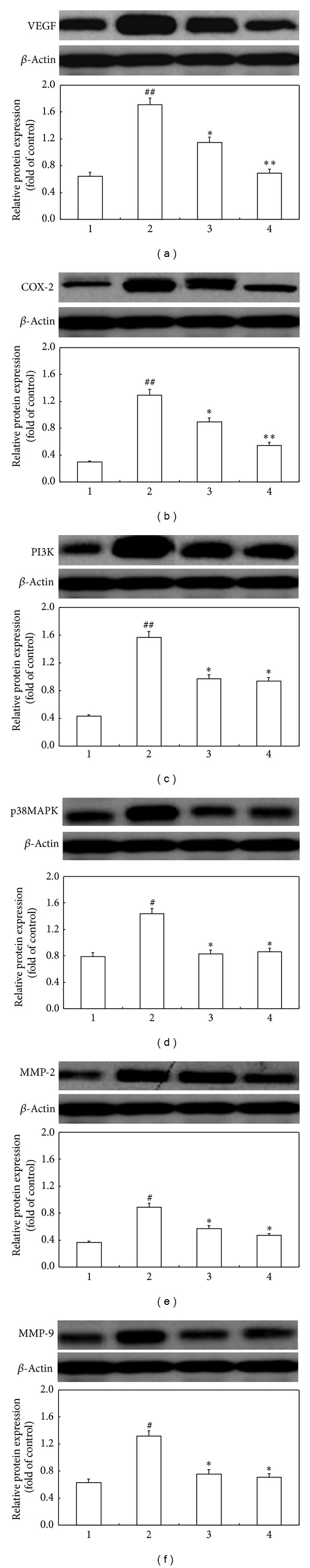 Naringenin/ β -CD complex significantly inhibits the protein expression of key mediators involved in the pathogenesis of CNV in rats. (a)–(f) are western blot analyses for protein levels of VEGF, COX-2, PI3K, p38MAPK, MMP-2, and MMP-9 and their quantification. β -Actin was used as an invariant control for equal loading. Group 1: normal rats; group 2: CNV rats without treatment; group 3: CNV rats with naringenin treatment; group 4: CNV rats with naringenin/ β -CD complex treatment. Data are expressed as mean ± SD; # P