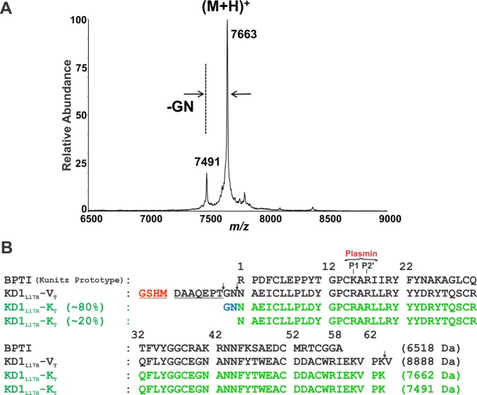 <t>MALDI-TOF-ESI</t> mass spectrometry data and amino acid sequence alignment of KD1 L17R -K T with the starting molecule (KD1 L17R -V T ) and BPTI. (A) Mass spectrometry data of KD1 L17R -K T obtained using an Applied Biosystems Voyager <t>DE-STR.</t> The spectra were calibrated; thus, the masses should be within 0.1% of the theoretical values. (B) Amino acid sequences of KD1 L17R -V T and the two KD1 L17R -K T species: one with N-terminus sequence Gly-Asn-Asn-Ala-Glu-Ile (∼80%) and a second with N-terminus sequence Asn-Ala-Glu-Ile (∼20%). Note that the minor sequence is internal to the major sequence starting at cycle 3 asparagine and that the calculated difference in MW between the two species is 171 Da; this is consistent with the mass spectrometry data shown in panel A. We infer that IIa or a contaminating protease cleaved the peptide bonds (shown by ↓) between amino acids Thr–Gly and Asn–Asn on the N-terminal side and between Lys–Val on the C-terminal side of KD1 L17R -V T . The numbering system used is that of BPTI (prototype Kunitz inhibitor). The N-terminal Gly-Ser-His-Met sequence in KD1 L17R -V T is derived from the IIa cleavage site introduced during cloning. The P1 and P2′ subsites recognized by plasmin are marked.