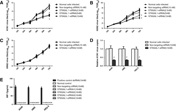 ST6GAL1 siRNA-transduced respiratory cells resisted human influenza virus challenge and did not induce an interferon response. Transduced A549 cells were challenged with H3N2, pdmH1N1, or H9N2 viruses. (A) A reduction in viral yield was seen in ST6GAL1 siRNA-transduced cells infected with and pdmH1N1 (B) H3N2 influenza viruses. a P