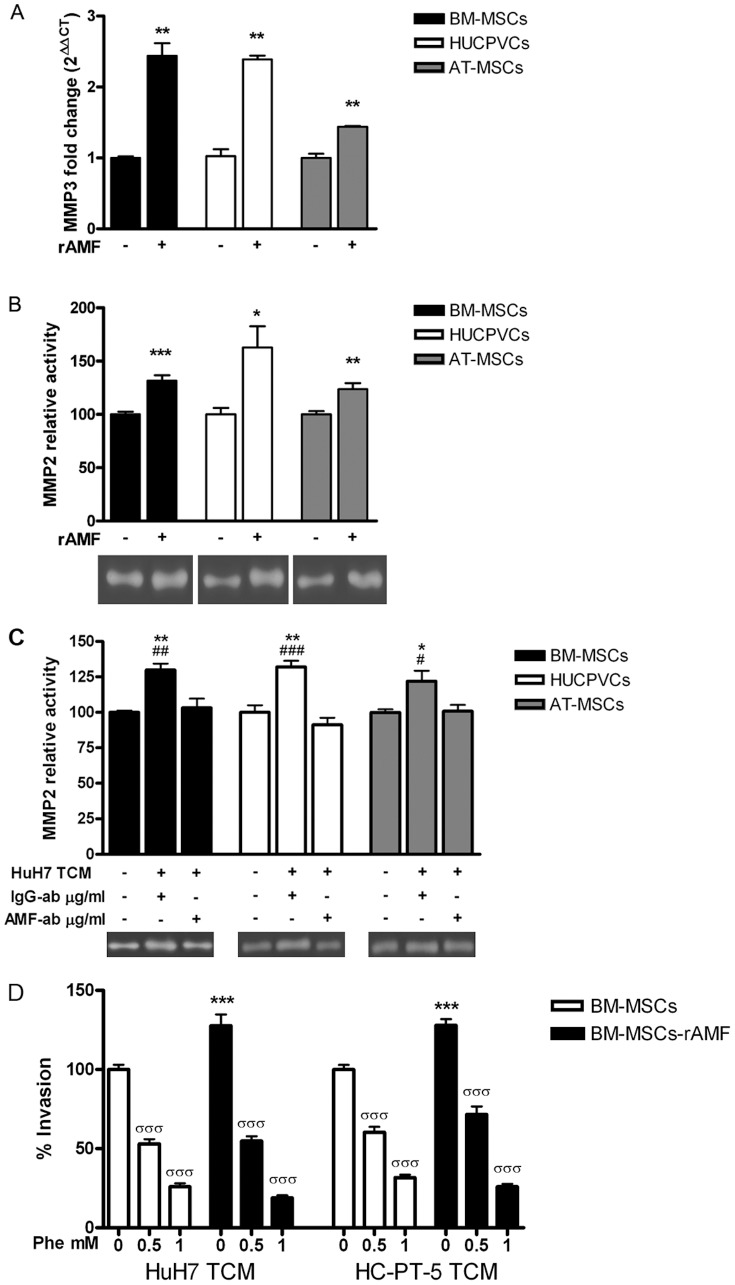MMP3 expression and MMP2 activity is induced in MSCs by rAMF. A) Analysis of MMP3 expression by qRT-PCR in BM-MSCs (black bars), HUCPVCs (white bars) or AT-MSCs (gray bars) stimulated with 1 µg/ml of rAMF. **p