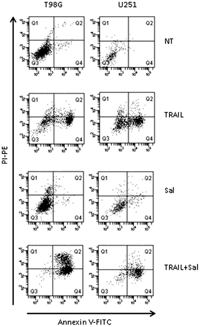 Effect of salinomycin and TRAIL added alone or in combination on the induction of apoptosis. T98G and U251 cells were incubated for 24(NT) or in the presence of salinomycin (10 µM), TRAIL (50 ng/ml) or salinomycin+TRAIL (at the above concentrations). The induction of apoptosis was evaluated by Annexin V-FITC and propidium iodide (PI) staining.