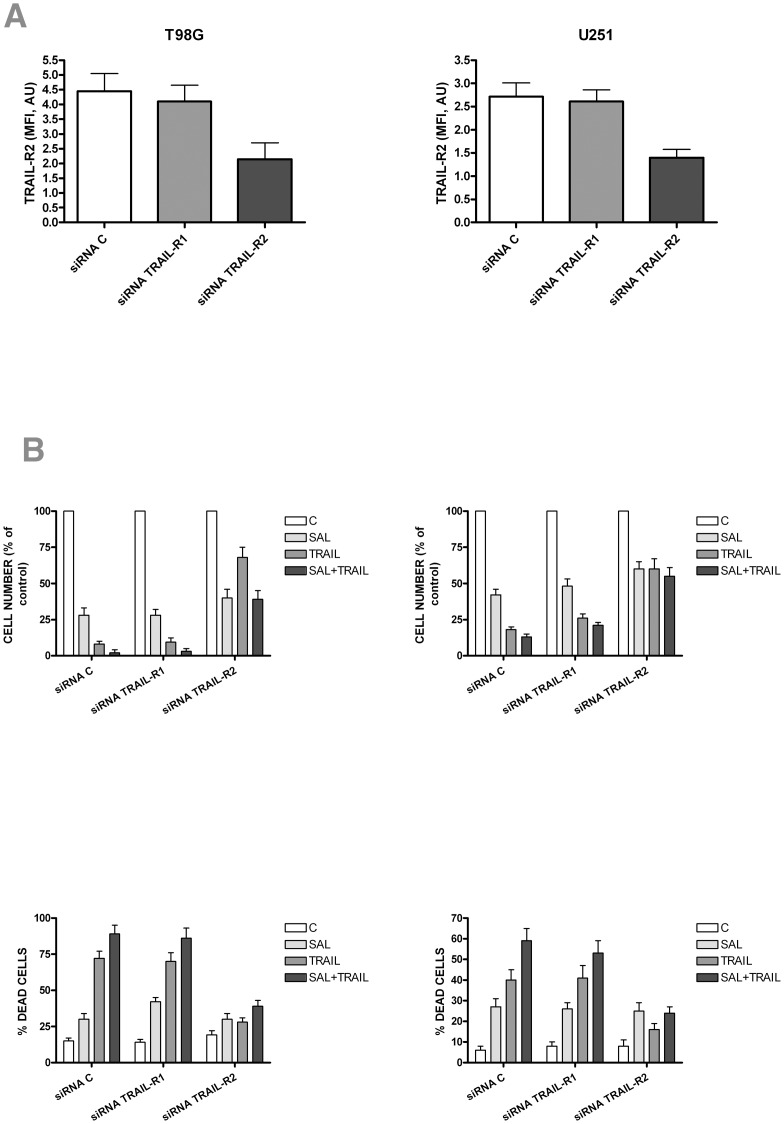 Effect of silencing of RNA encoding TRAIL-R2 on the cell growth inhibition and induction of cell death induced by salinomycin or TRAIL added alone or in combination. T98G (left panels) and U251 (right panels) cells have been incubated for 72 h either with siRNA C or siRNA TRAIL-R1 or siRNA TRAIL-R2 and then incubated for additional 24 hours either in the absence of additives (Control, C) or in the presence of either salinomycin (10 µM) or TRAIL (50 ng/ml) or both compounds at the above doses. At the end of this time the cells have been recovered and evaluated for TRAIL-R2 expression (top panels) by flow cytometry or for the cell survival (middle panels) by cell counting after trypan blue staining or for the evaluation of cell death (assayed by flow cytometry after labelling with annexin V and propidium iodide). The data reported in the figure represent mean values ± SEM observed in three separate experiments. The statistical analysis of the data showed: in top panels a very significant difference between siRNA TRAIL-R2 and si RNA C and siRNA TRAIL-R1 (for both p