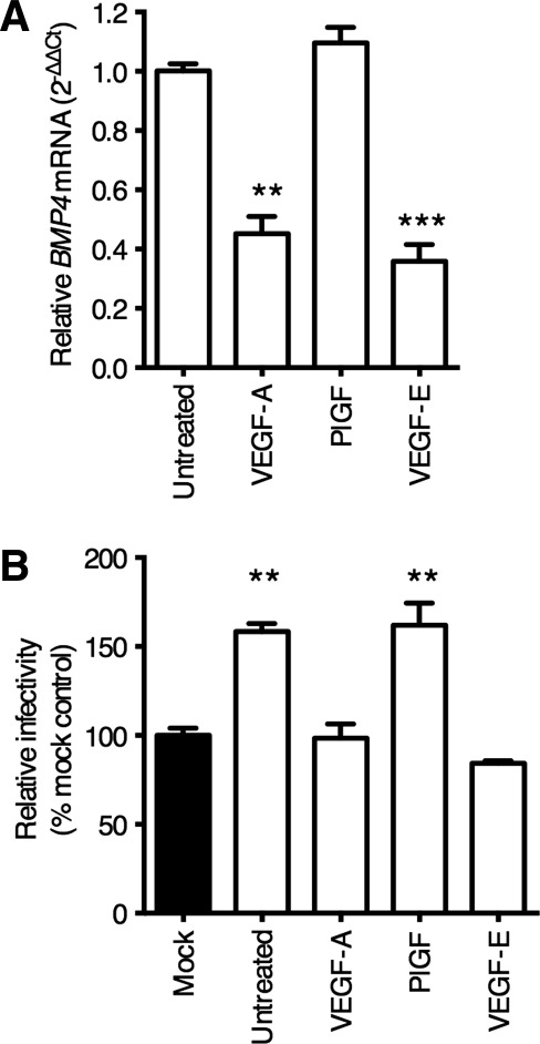 Endothelial BMP4 expression is regulated by way of VEGFR-2. LSEC were starved of VEGF overnight and stimulated with VEGF-A, PlGF, or VEGF-E (all 10 ng/mL) for 8 hours, lysed, and RNA prepared for qRT-PCR analysis of BMP4 mRNA (A). Conditioned media (CM) from LSEC treated with the above ligands was collected and used to treat Huh-7.5 cells for 18 hours prior to infecting with HCV JFH-1 (B). Data are mean ±1 SD of n = 4 donor LSEC. Statistical comparisons were made with the Kruskal-Wallis test with Dunn's correction as appropriate and where ** P