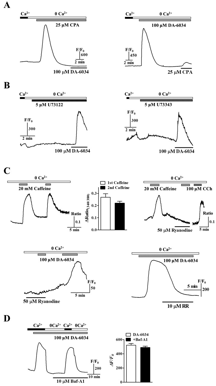 Relationship with internal Ca 2+ stores and DA-6034. (A) DA-6034 induced [Ca 2+ ] i increases were disappeared after ER depletion by CPA. (B) However, DA-6034 induced Ca 2+ influx not inhibited by the PLC inhibitor, U73122, and its close analogue, U73343. (C) Caffeine induced [Ca 2+ ] i increases were repeated by the second application of caffeine ( upper left panel ) and were blocked by ryanodine, which was an inhibitor of ryanodine receptors ( upper right panel ). DA-6034 induced [Ca 2+ ] i increases also inhibited by ryanodine ( bottom left panel ) and RR ( bottom right panel ). (D) DA-6034 induced [Ca 2+ ] i increases were not inhibited by Baf-A1, which was a specific inhibitor of vacuolar-type H + -ATPase. Data were expressed as the mean±SEM.