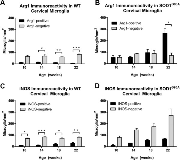 Expression of arginase1 (Arg1) and inducible nitric oxide synthase (iNOS) in microglia of the ventral horn of wild-type (WT) and amyotrophic lateral sclerosis-linked mutant human superoxide dismutase transgene (SOD1 G93A ) cervical spinal cord. The number of Arg1-negative and Arg1-positive cervical microglia remained relatively constant over time in WT mice (A) . In the cervical spinal cord of SOD1 G93A mice, the number of Arg1-positive and Arg1-negative microglia remained equivalent until 22 weeks of age, when there was an increase in the number of Arg1-positive microglia (B) . There were greater numbers of iNOS-negative microglia than iNOS-positive microglia throughout the time course in WT mice (C) . The numbers of iNOS-positive microglia and iNOS-negative microglia both increased with disease progression in the SOD1 G93A cervical spinal cord (D) . * P