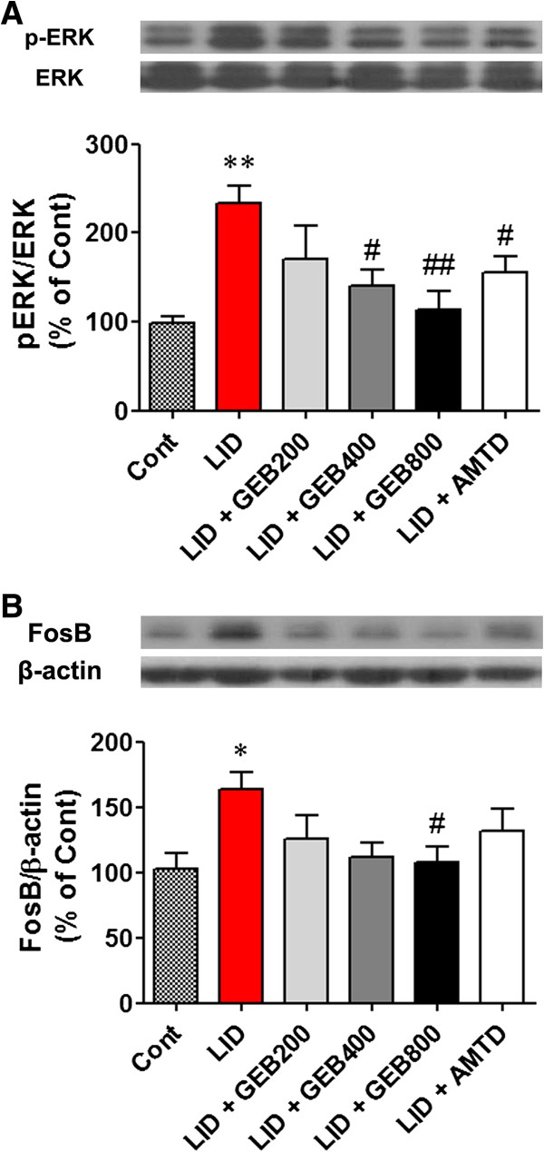 Protein analysis of <t>ERK1/2</t> phosphorylation and FosB expression in striatal tissue. Protein levels were evaluated by western blotting the striatal extracts from each group of mice. (A, B) Phospho-ERK1/2 (A) and FosB (B) signals were observed in the ipsilateral sides of striata. Representative bar graph showing optical densities from the blotting experiments. *P