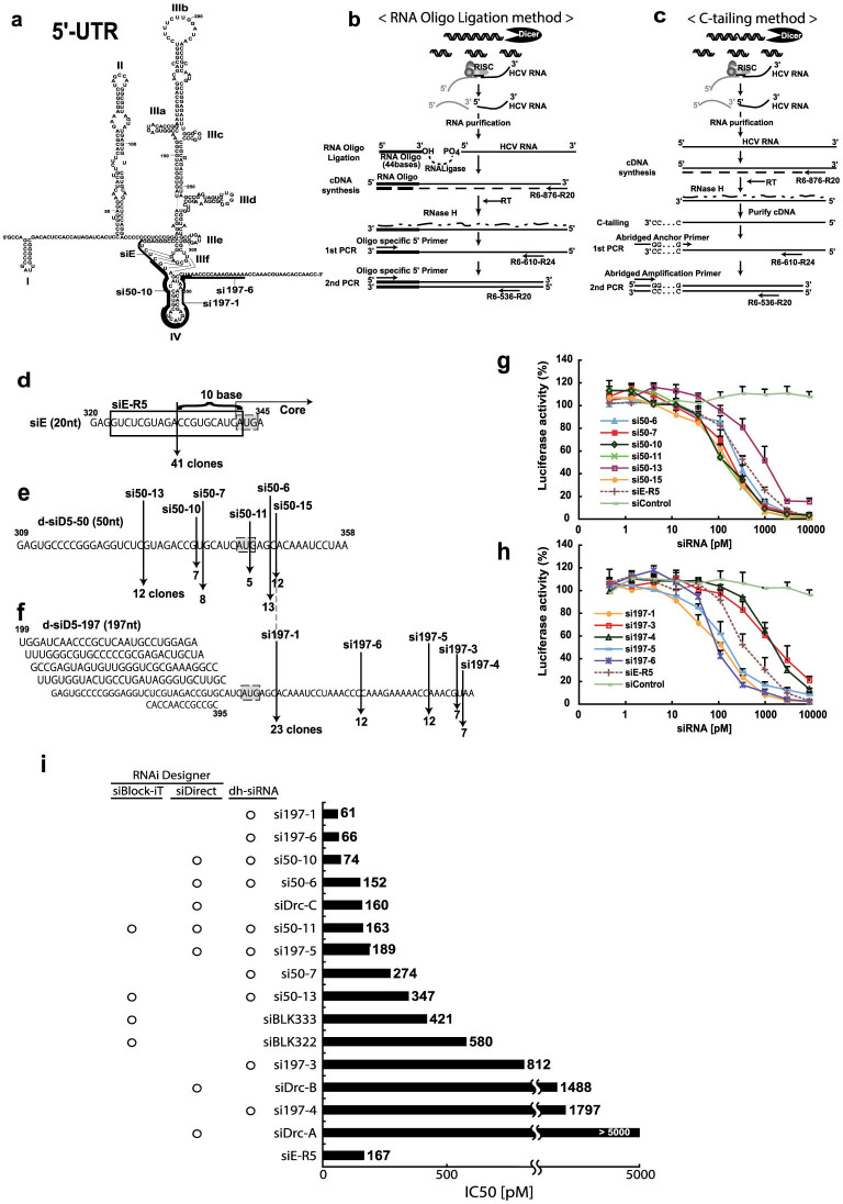 Generation and efficacy of dicer-hunting siRNAs (dh-siRNAs). (a) Complicated secondary structure of the 5′-UTR in the HCV genome 50 and representation of the potent siRNA sequences we identified (si50-10, si197-1, and si197-6). (b, c) 5′-RACE strategy for identifying the RNAi cleavage sites of the target HCV genome using the RNA oligo ligation method (b) and the C-tailing at the 3′-end of RNA method (c). (d–f) Representation of the cleavage sites by siRNA and the number of clones in the sequences of HCV RNA genome that were used as templates. Cleavage site of the HCV RNA genome by siE (d), d-siD5-50 (e), and d-siD5-197 (f) was identified using the two RACE methods (2b and 2C). (g, h) Evaluation of silencing efficacy of dh-siRNAs. The HCV-replicon cells with reporter genes were transfected with the dh-si50 series (si50-6, 7, 10, 11, 13, and 15) (g) or the dh-si197 series (si197-1, 3, 4, 5, and 6) derived from d-si197 (h). Luciferase activity was measured after 48 hr. Data are presented as mean ± s.d. ( n = 5) of values normalized to those obtained with mock-transfected cells. (i) Comparison of IC50 for inhibition of HCV replication by siRNAs that were derived from dh-siRNA or predicted by siRNA web design tools. Based on the HCR6 (genotype 1b) sequence, commercial software (siBlock-iT, siDirect) predicted several siRNA sequences ( Supplementary table 1 ). IC50 values represent the mean for independent determinations ( n = 5) using HCV replicon cells harboring subgenomic HCR6 sequences.