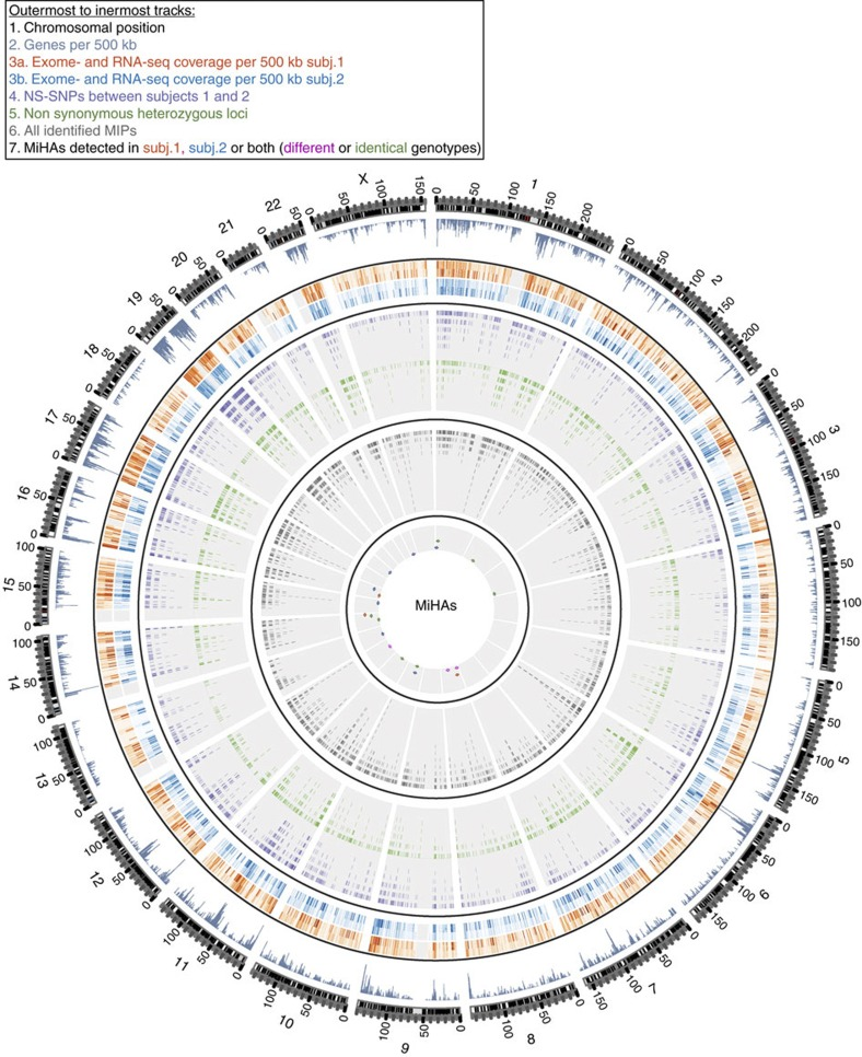 Integrative view of the genomic landscape of the MIP repertoire of HLA-identical siblings. Circos plot showing similar proportions of sequenced genomic and transcriptomic regions in both siblings (tracks 1–3) and the small number of identified MiHAs (track 7) relative to the number of MS-detected MIPs (track 6) and sequenced polymorphic regions (tracks 4–5). From outermost to innermost tracks: (1) ideogram indicating chromosomal positions for each chromosome, (2) histogram depicting the number of genes for 500 kb windows, (3) heat map showing the fraction of bases of 500 kb windows covered by exome (outer circle) or transcriptome (inner circle) sequencing of subjects 1 (orange) and 2 (blue), (4) tile graph of 4,833 ns-SNP between siblings (purple), (5) tile graph of 3,774 heterozygous loci where both alleles are shared by the two subjects and lead to non-synonymous amino-acid changes (green), (6) tile graph representing genomic regions that give rise to 4,468 MIPs, (7) each dot represents one single gene-encoded MiHA deriving from regions containing ns-SNPs and detected by MS in subjects 1 (orange), 2 (blue) or both (green).