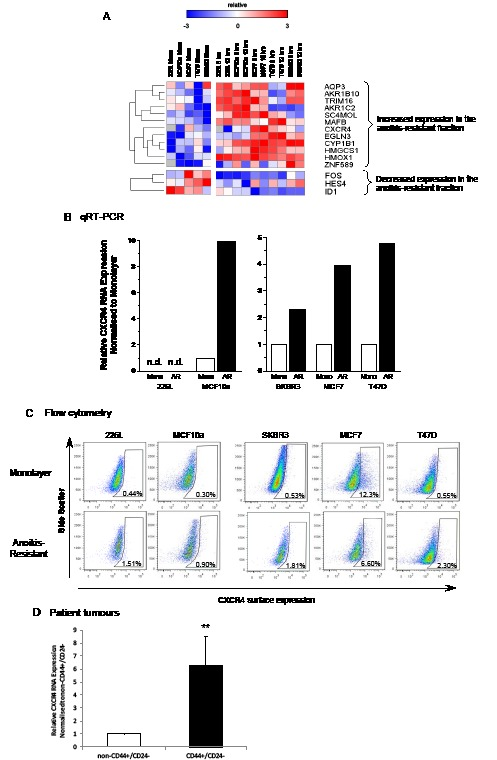 CXCR4 RNA and protein expression is increased in anoikis-resistant cells Gene expression of the anoikis-resistant fraction versus monolayer cells of 2 normal (MCF10a and 226L) and 3 malignant (SKBR3, MCF7 and T47D) breast cell lines were analysed using an <t>Agilent</t> custom microarray. 12 genes increased > 2-fold expression in the anoikis-resistant population versus monolayer cells while 3 genes significantly decreased > 2-fold expression averaging expression across all cell lines (A). Quantitative RT-PCR and FACS confirmed increased gene and cell surface expression of CXCR4 in 4 out of the 5 cell lines analysed compared with monolayer cells (B and C). CXCR4 transcript levels were also found to be significantly higher in CD44+/CD24− flow sorted cells from Creighton et al. 2009 [ 28 ] (D). Pearson correlation was used for hierarchical clustering of gene expression (rows), red = high and blue = low relative to mean (white), grey = no expression. Mono – monolayer cells, AR – 12 hour anoikis-resistant cells, n.d. – not detectable. FACS plots representative of 3 independent experiments, (D) n = 14, error bars ± S.E.M., ** p