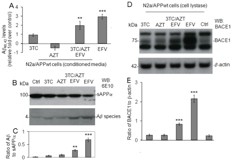 EFV or EFV/3TC/AZT treatment promotes Aβ generation in cultured neuronal cells via BACE-1 activation in vitro. Aβ species were analyzed in cell lysates from SweAPP N2a cells ( A ) by ELISA. Data are represented as the mean ± of a percentage of Aβ peptides secreted 24 h after 3TC, AZT, EFV, or 3TC/EFV/AZT administration, relative fold over control (PBS treated). Significant increases in Aβ were observed in EFV or EFV/3TC/AZT treated cells were observed compared to control (*** P