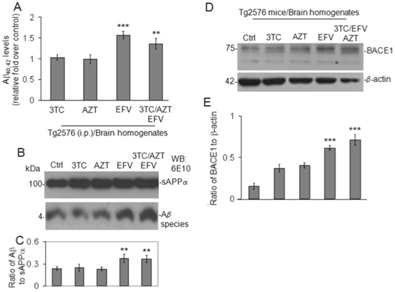 EFV/3TC/AZT increases soluble Aβ levels in Tg2576 mice via BACE-1 activation in vivo. ( A ) Aβ 40, 42 peptides were analyzed in brain homogenates from 8 month old Tg2576 mice by ELISA (n = 5 mice for each group). One-way ANOVA followed by post hoc comparison revealed significant differences between control (Tg2576mice treated with PBS) and EFV or EFV/3TC/AZT -treated Tg2576 mice ( P