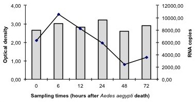 Comparison between the median optical density revealed by the Platelia Dengue NS1 Ag-ELISA (bars) and the median number of RNA copies determined by qRT-PCR (line) of Aedes aegypti mosquitoes killed naturally and analyzed for dengue virus detection between 0–72 h after death.