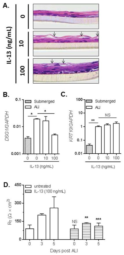 IL-13 downregulates DSG1 and promotes IBF in esophageal epithelial cells H E-stained sections of EPC2 cells differentiated at the ALI in the presence of 0 (untreated), 10, or 100 ng/mL IL-13 (A). Arrows indicate a cell separation within to the suprabasal epithelium. Images are representative of 3 experiments performed in duplicate. Expression levels of DSG1 (B) and KRT10 (C) were measured by qPCR in submerged or ALI-differentiated EPC2 cells in the absence (0 ng/mL) or presence of IL-13 (10 or 100 ng/mL). TER (R T ) measurements on EPC2 cells at 0, 3, and 5 days following differentiation at the ALI in the absence (untreated) or presence of IL-13 (100 ng/mL) (D). Data are from 3 experiments performed in duplicate and are represented as the mean + SEM: NS (not significant), ** p